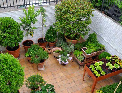 Jardín en San Cugat