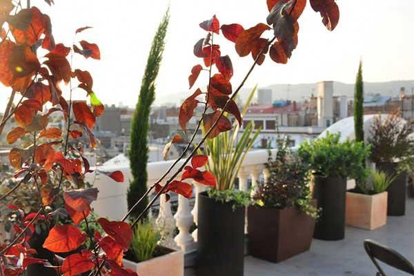 diseño terraza Balmes