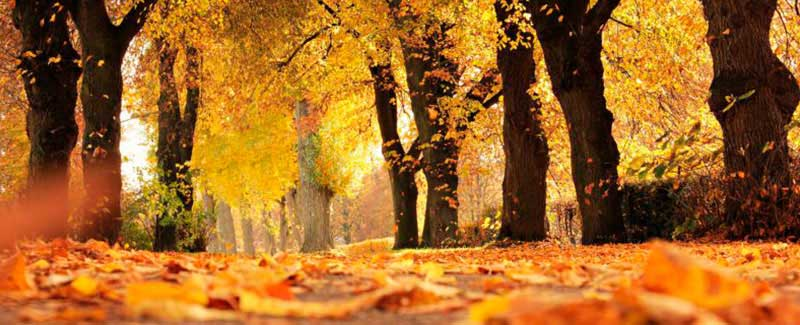 plantar en otoño