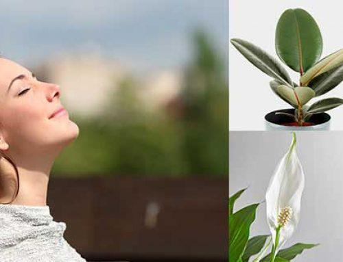 Mejores plantas para purificar el aire