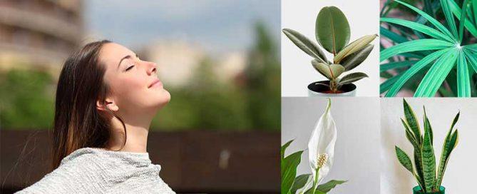 mejores plantas para purificar el aire de casa