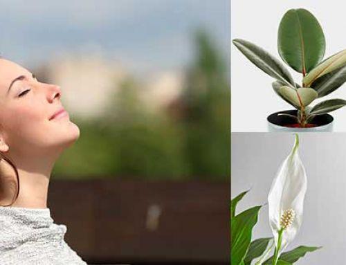 Millors plantes per purificar l'aire de casa