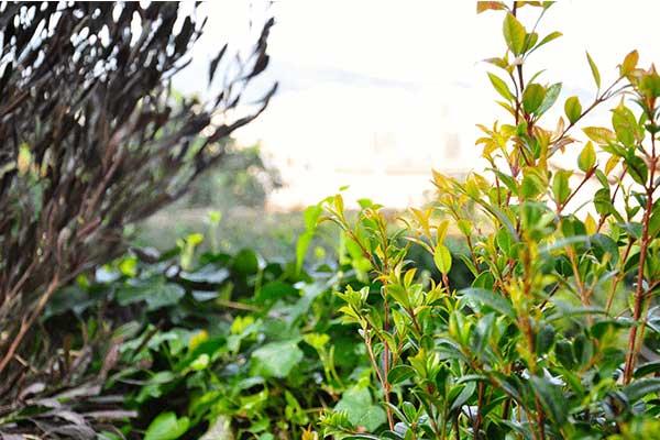 diseños de jardines Horta