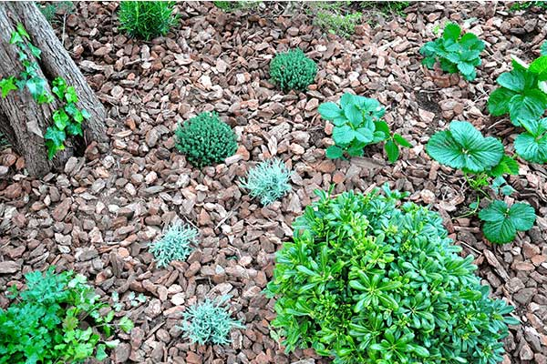 disseny de jardí Horta