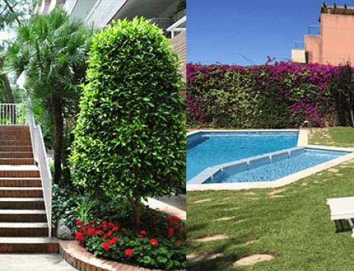 Manteniment de jardins a les comunitats de veïns