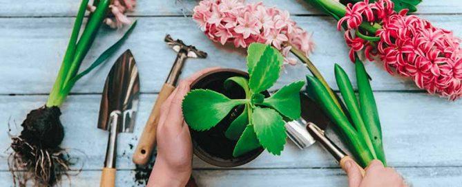 plantar durant la primavera