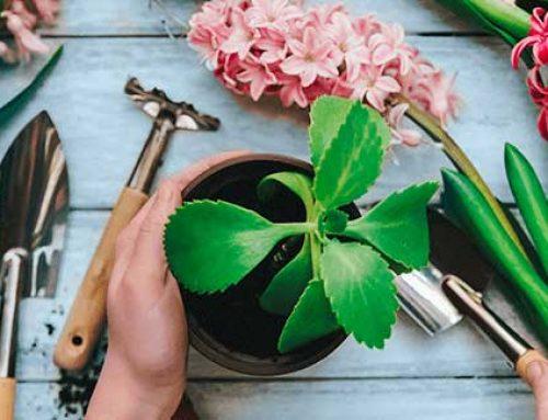 Plantar en Primavera