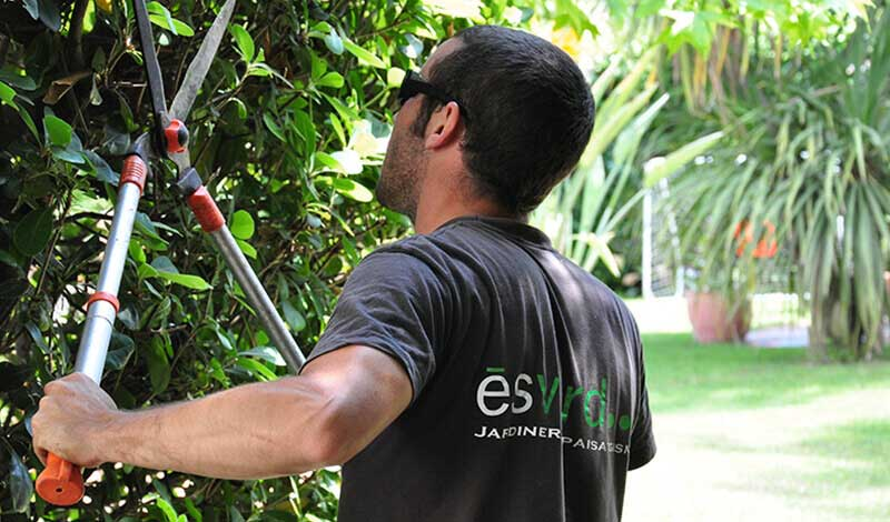 projectes de manteniment de jardins