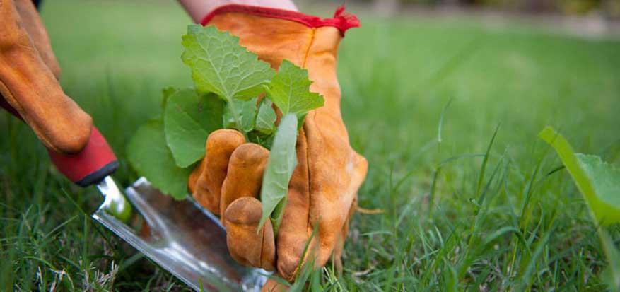 servei manteniment jardins