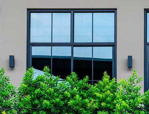 Plantas para oficinas. Por unas empresas más verdes