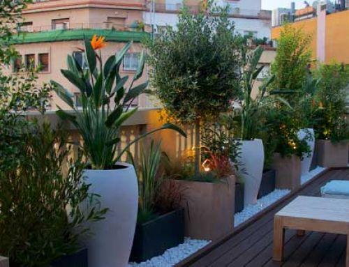 La jardineria urbana. El pulmó de la ciutat