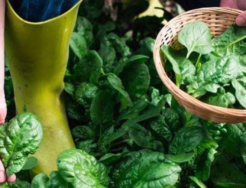 Jardineria sostenible, una responsabilitat social i individual