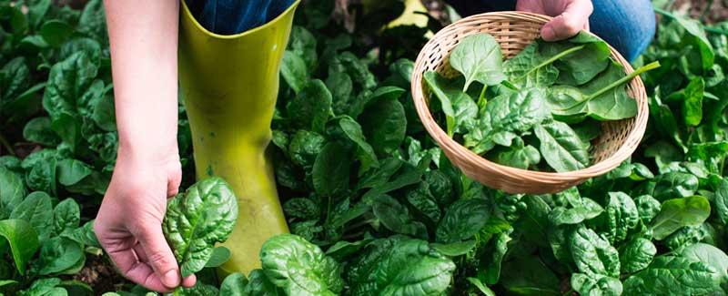 jardineria sostenible
